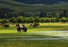 Free Horses Royalty Free Stock Image - 5912846