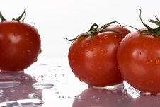 Free Tomatoes Stock Photography - 5913452