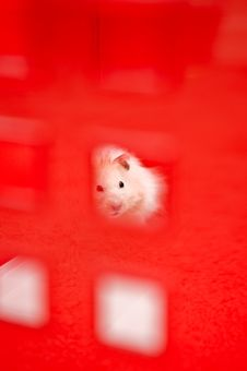 Free Hamster Royalty Free Stock Images - 5914229