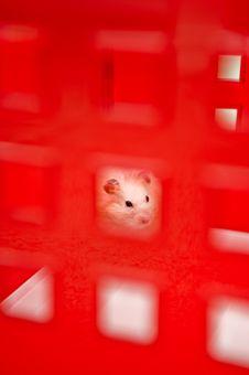 Free Hamster Stock Image - 5914251
