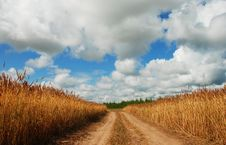 Free Road In Barley Field Stock Photos - 5915133