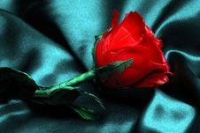 Rose On Silk Stock Image