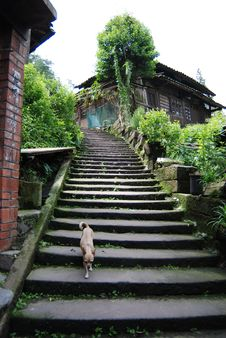 Free Stair And Dog Royalty Free Stock Photos - 5916038
