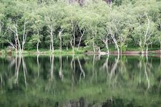 Free Trees, Reflection In Lake Royalty Free Stock Images - 5916069