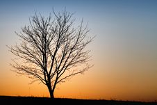 Free Silhouette Of A Tree Royalty Free Stock Photos - 5917718