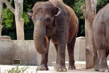Elephant At The Zoo Royalty Free Stock Photos