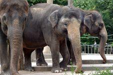 Free Three Elephants Royalty Free Stock Photo - 5918495