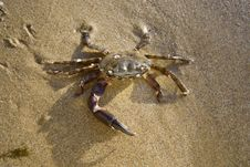 Free Crab On The Sand Stock Image - 5918651