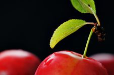 Free Cherry-plum. Royalty Free Stock Photography - 5918747