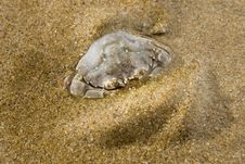 Free Crab On The Sand Stock Photo - 5918910