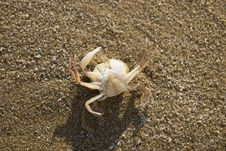 Free Crab On The Sand Royalty Free Stock Images - 5918929