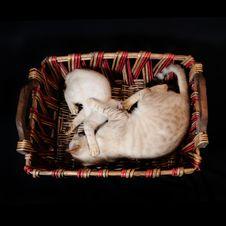 Cats Playing Stock Photos