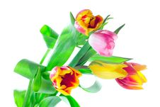 Free Bunch Of Tulips Stock Image - 5919831