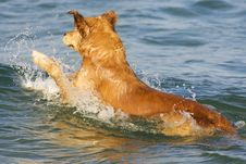 Free Swimming Dog Stock Photography - 5919962