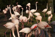 Free Flamingo Stock Photo - 5920050