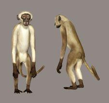 Free Monkey Royalty Free Stock Photo - 5920945