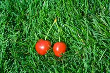 Free Cherries In Grass Royalty Free Stock Photography - 5921457