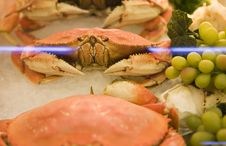 A Crab In A Seafood Store Window Royalty Free Stock Photos