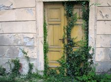 Free Ancient Wooden Door With Ivy Royalty Free Stock Photos - 5922238