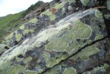 Free Lichen On The Stone Royalty Free Stock Photo - 5922315
