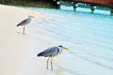 Free Grey Heron At The Beach Stock Image - 5922631