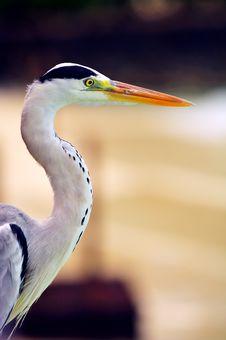 Free Grey Heron At The Beach Stock Photos - 5922693