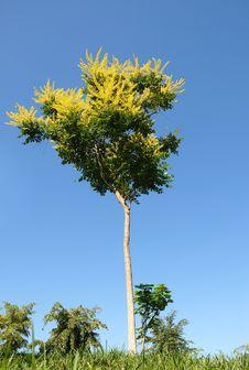Free Tree Stock Photos - 5922753