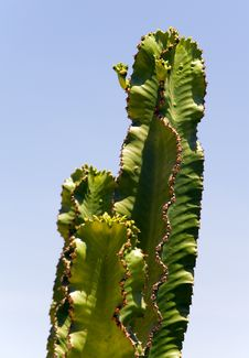 Free Cactus Stock Photo - 5922770
