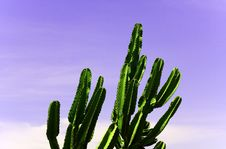 Free Cactus Royalty Free Stock Photography - 5922857