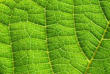 Free Green Leaves Stock Images - 5923034