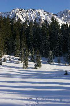 Free Shadows In The Snow Stock Photos - 5923493
