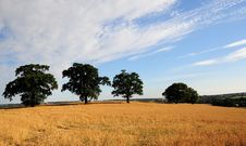 Free Countryside In The Evening Stock Images - 5923864