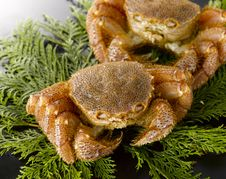Free Crabs Royalty Free Stock Photos - 5924368