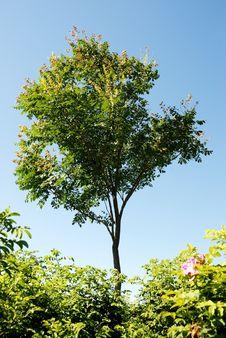 Free Tree Stock Image - 5924771