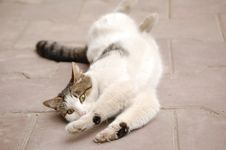 Free Cat Rolling On Ground Stock Photos - 5925303