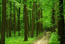 Free Forest Path Royalty Free Stock Photography - 5925957