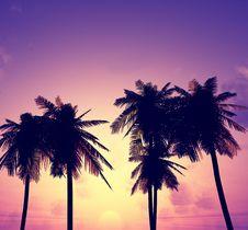 Free Beautiful Sunset Stock Photo - 5926270