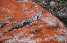 Free Red Lichen Royalty Free Stock Images - 5926369