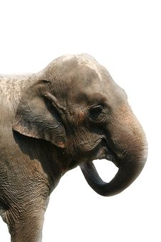 Free Elephant Stock Photo - 5927100