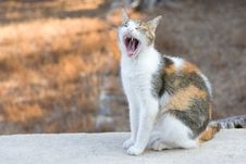 Free Yawning Cat Stock Images - 5927684