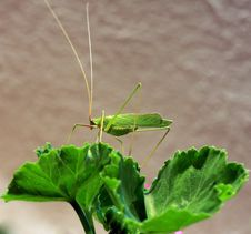 Free Mantis Stock Photography - 5927862