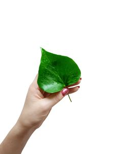Free Fresh Green Leaf Stock Image - 5928851