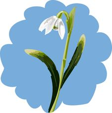 Free Snowdrop Royalty Free Stock Photography - 5929307