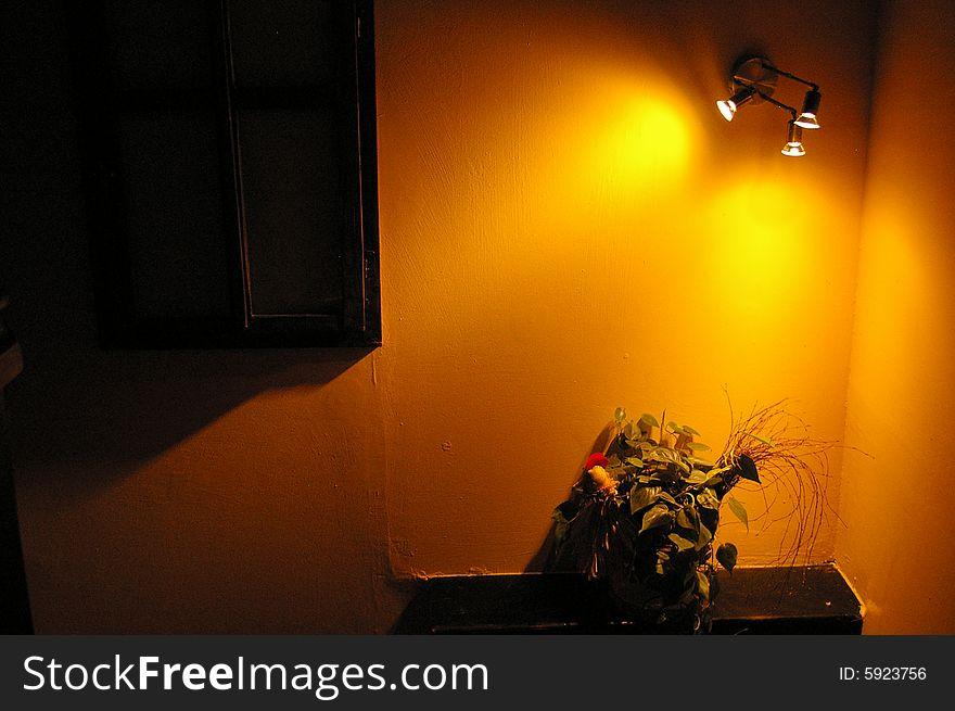 Flowers by orange wall