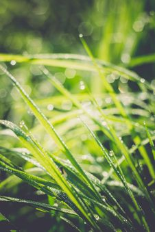 Free Grass Background Shallow Dof Retro Royalty Free Stock Photography - 59250607