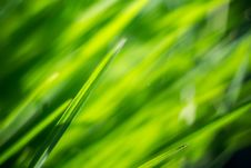 Free Macro Of Morning Grass Stock Photo - 59250800