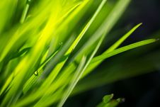 Free Macro Of Morning Grass Royalty Free Stock Photo - 59250825