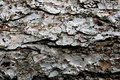 Free Pine Bark Stock Photography - 5937142