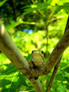 Free Tree Frog Stock Photos - 5938143