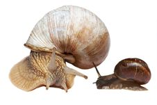 Free Big And Small Snails Royalty Free Stock Photos - 5930188